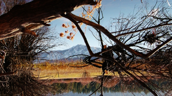 WeeklyPhoto Challenge(Reflections)