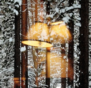 Light in the Winter Forest